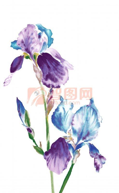紫色花卉花纹设计