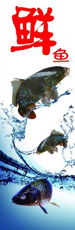 新鲜鲤鱼素材