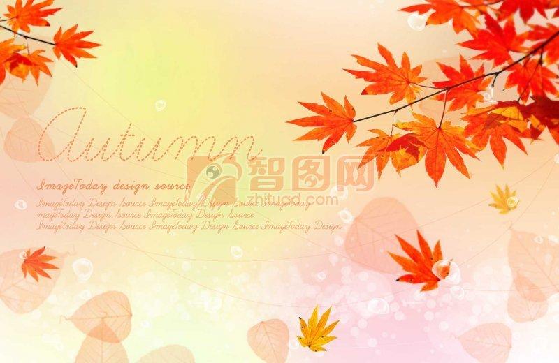 红枫叶背景卡片