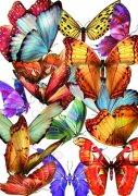 分層蝴蝶大全
