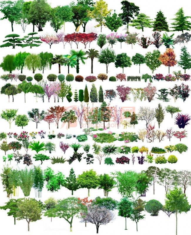 植物平面图荷花
