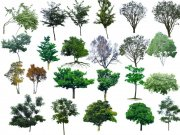 各种园林树苗