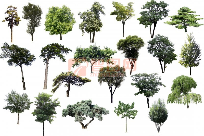 扣好的各種樹