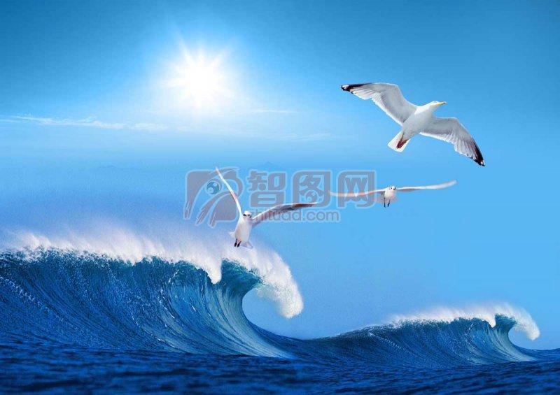 大鵬展翅 海浪 激情的海浪