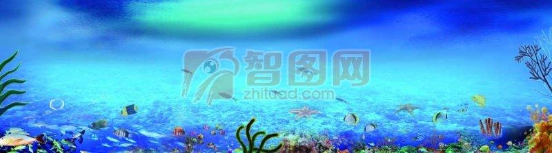 海洋生物世界