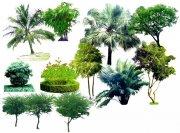 园林景观花草树林素材