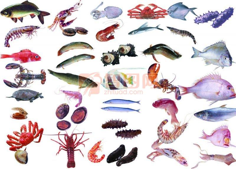 鱼类海鲜素材