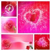 玫瑰花画册