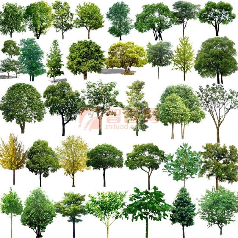 【psd】树木素材