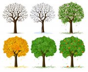 綠色環保樹
