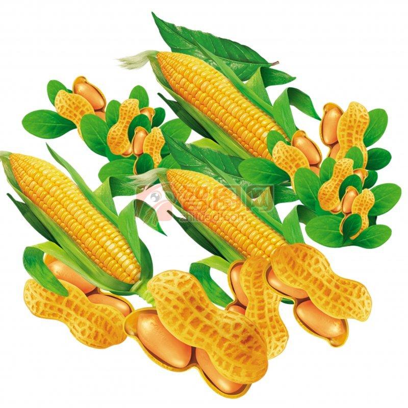 金色花生玉米