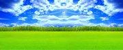 优美风景 草坪