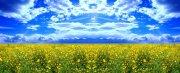 优美风景 一片野花