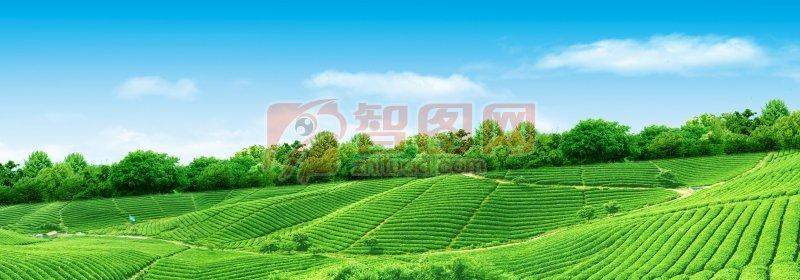 梯形风景草地