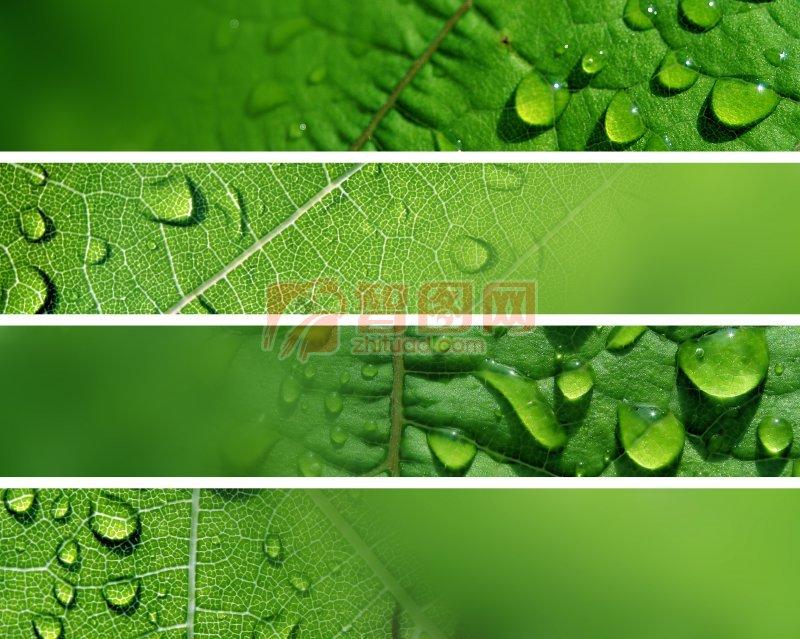 绿色树叶摄影