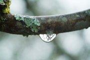 粗枝头水滴