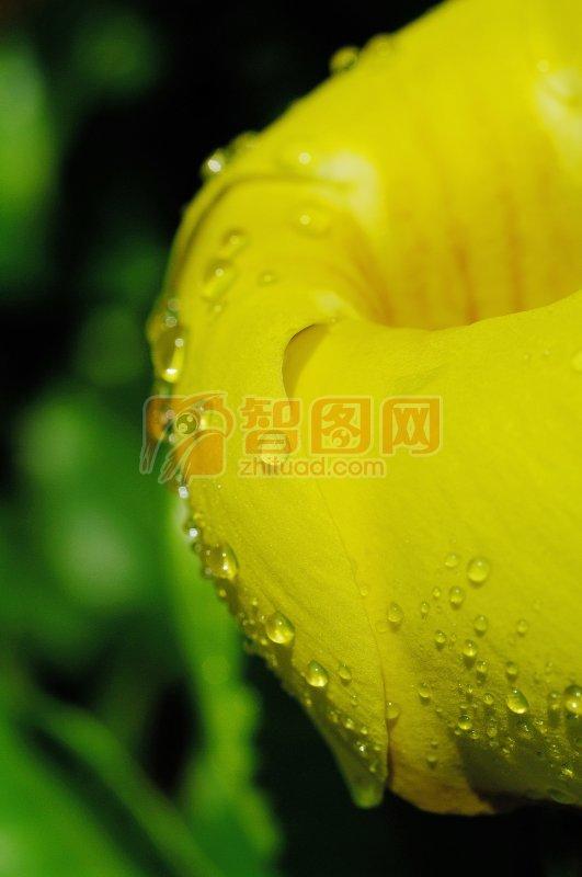 摄影 高清风景摄影元素 说明:-黄色花朵 上一张图片:  枝头水滴