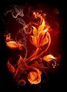 火组成的花朵