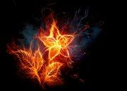 火红花朵枝叶