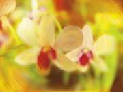 黄色背景鲜花元素