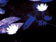 白色鲜花元素