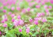 粉色鲜花素材