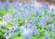 蓝色鲜花元素