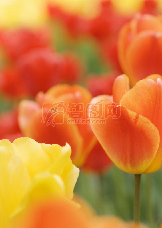 橘黄色鲜花