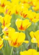 黄色鲜花摄影