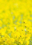 黄色花海元素