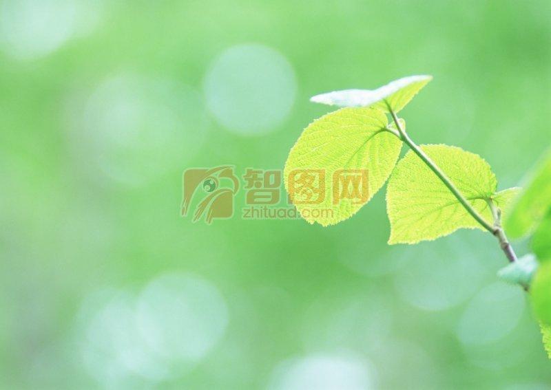 绿色树叶素材