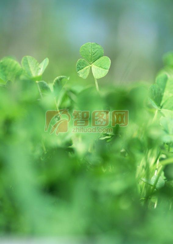 绿色树叶元素