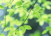 树叶元素摄影
