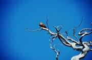 藍色背景樹木攝影