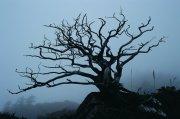 灰色背景樹木