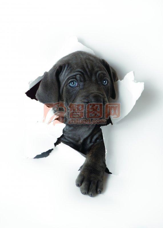 黑色宠物狗澳门永利赌场网址