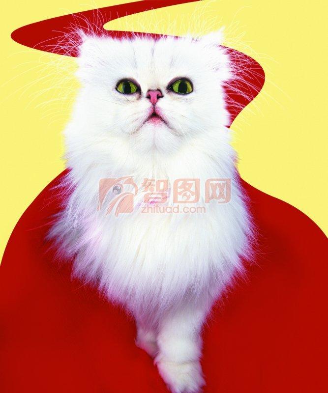 【jpg】白色猫咪图片