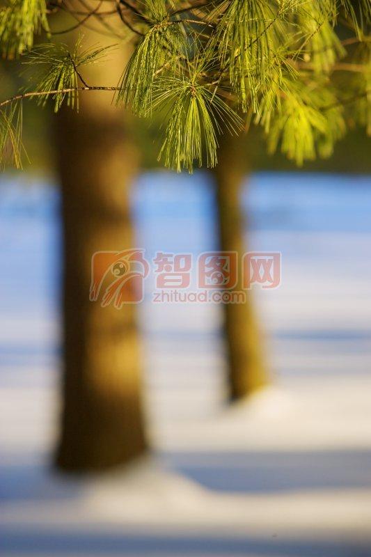 樹葉元素攝影