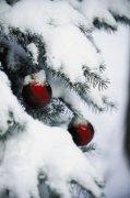 雪景元素攝影