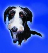 黑白色宠物狗