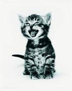 张嘴可爱小猫