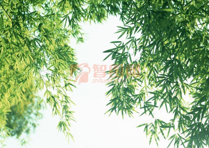 竹叶摄影素材