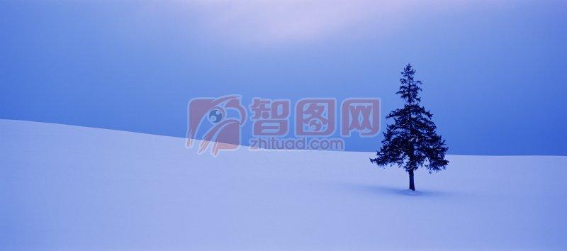 深蓝森王蛇图片