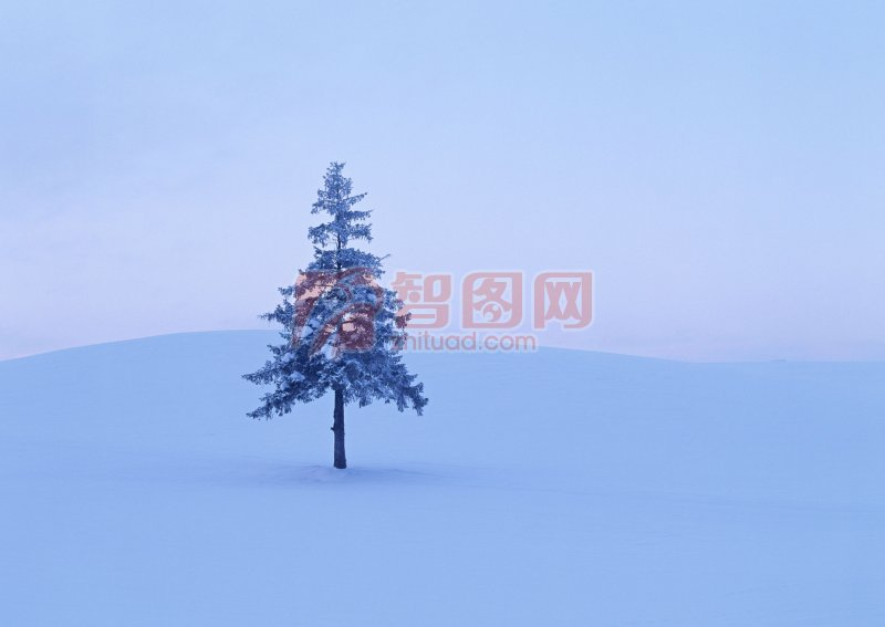 【jpg】雪地松树