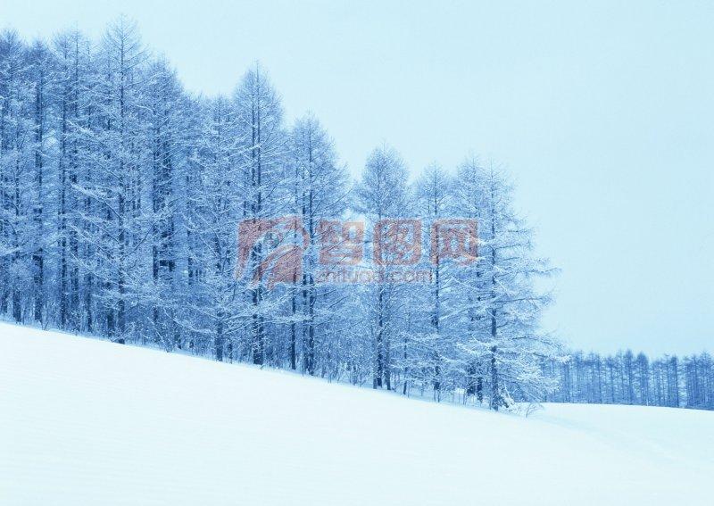整齊的樹林 美麗的霜花