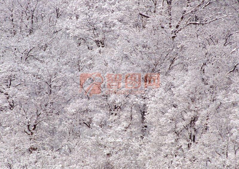 自然景色之霜花