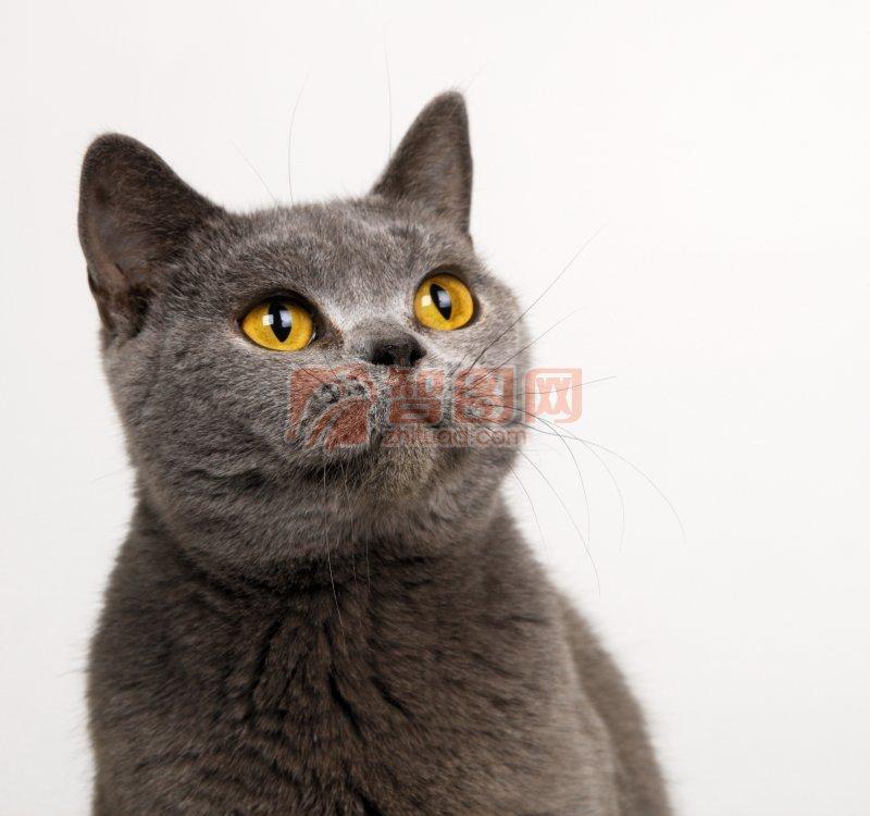 仰望的猫咪