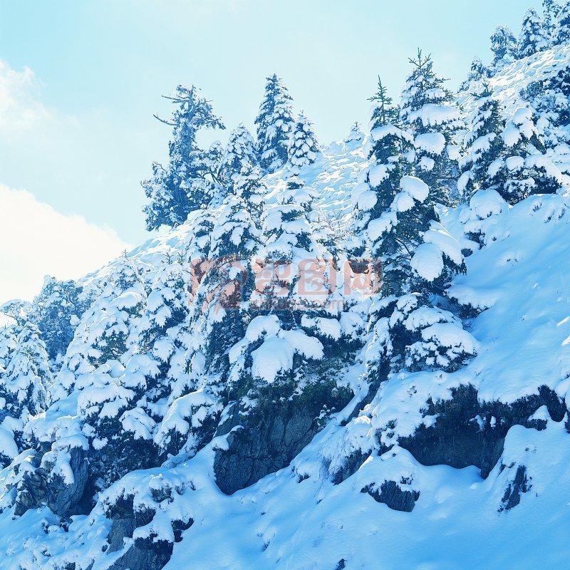 覆蓋的雪山