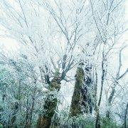 冰清玉潔的景色
