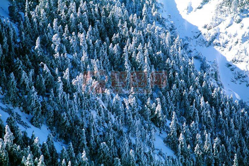 冬天的雪景素材 洁白的雪景